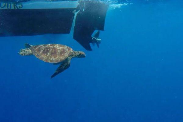 2 tortues retrouvent la liberté