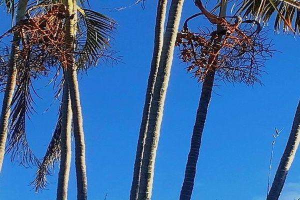 Palmier sur ciel bleu avril 2019