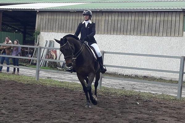 dressage de chevaux