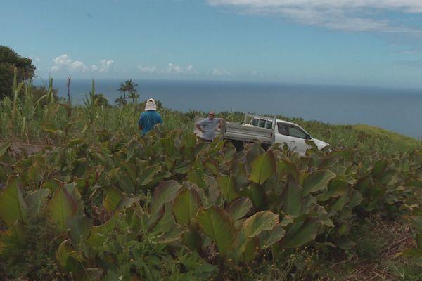 plantation de conflores