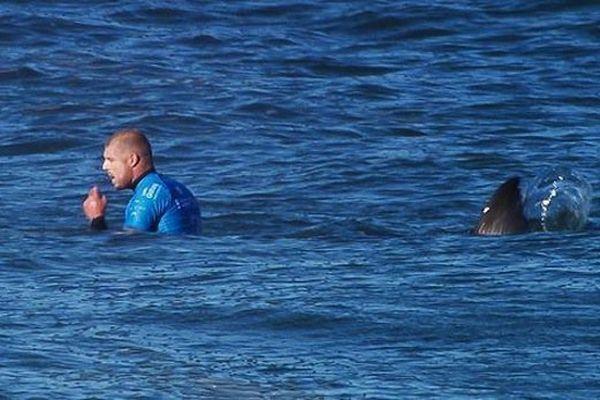 attaque requin afrique du sud