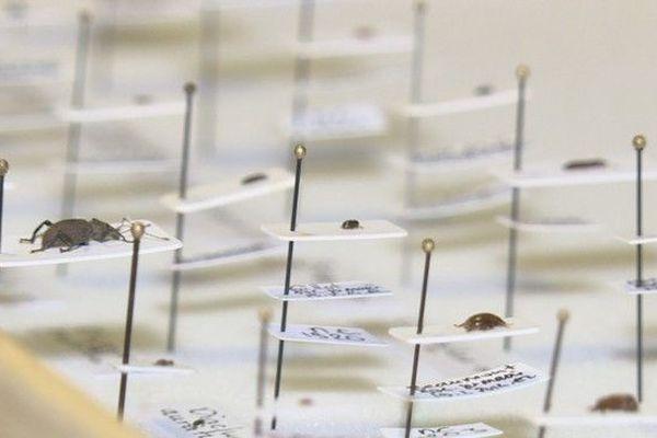 Découverte insectes 190119