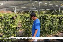 Coprah, apiculture et vanille : la trilogie gagnante de Céline