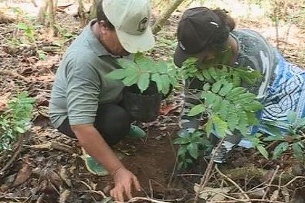 femmes et plants d'arbre