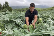 Stéphane Fontaine, 33 ans, est producteur d'artichauts à la Plaine des Makes.