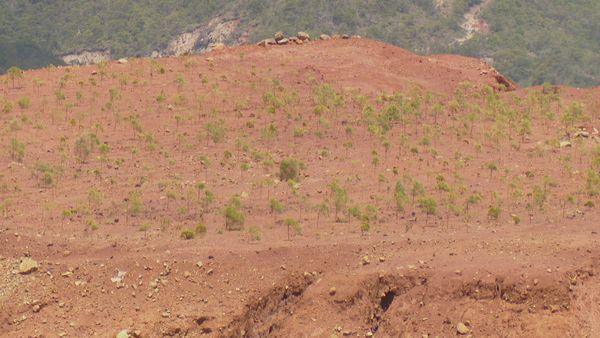 Kouaoua Mine revégétalisation