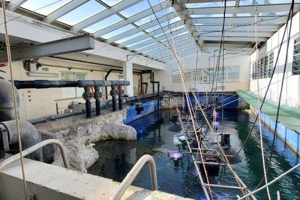 travaux aquarium