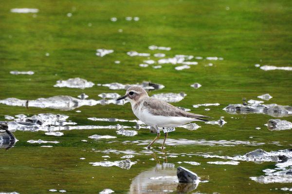 Des passionnées dans le sillages des oiseaux migrateurd