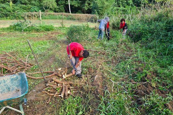 MFR de Poindimié formation agricole