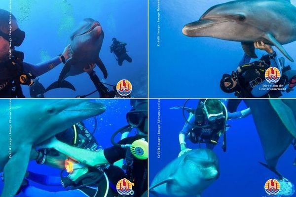 dauphins / plongeurs