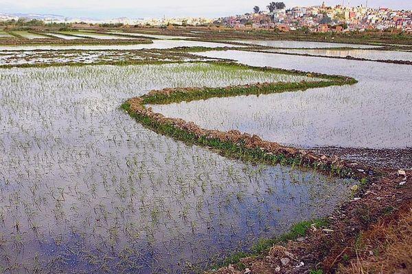 Rizière de Betsimatatatra au pied d'Antananarivo