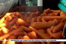 Vers un moratoire sur l'importation de carottes ?