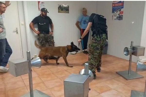 chien dressé détection covid