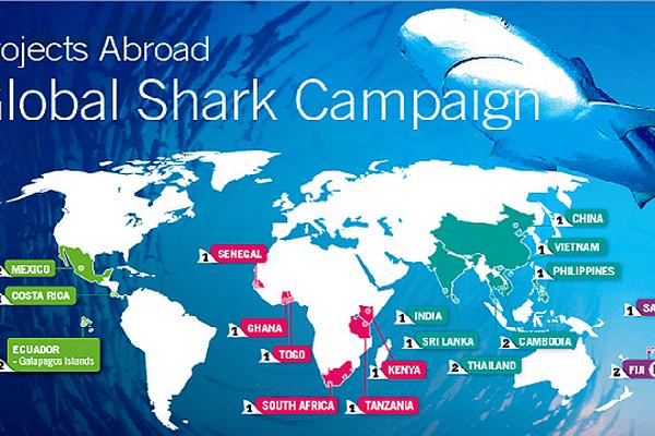 """La 18e édition de la """"global shark campaign"""" se déroule à Fidji en janvier"""