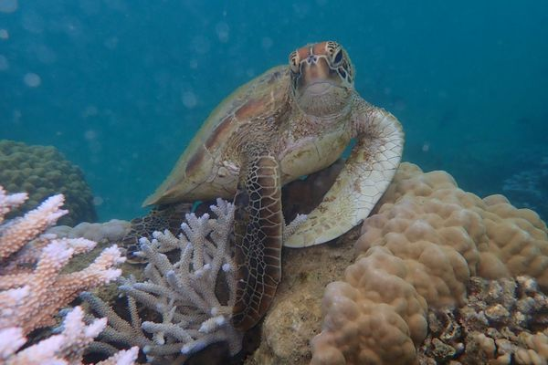 Tortue sous-marine