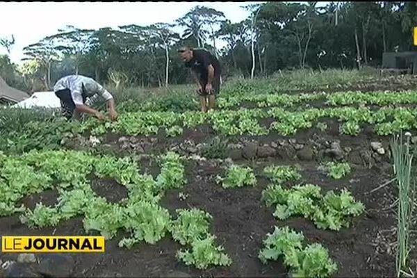 Agriculture bio à Bora Bora