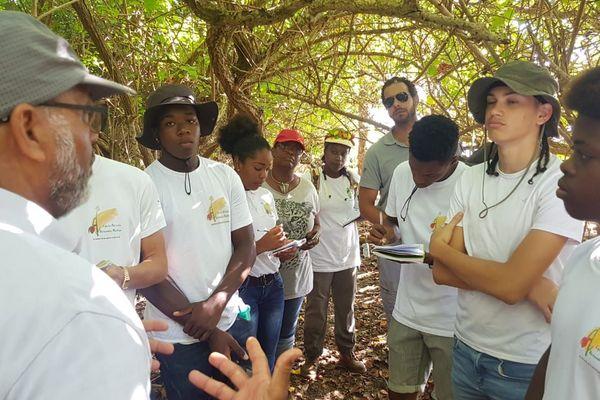 restauration forêt marécageuse Goyave