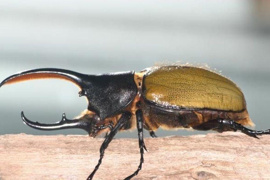 Des projets d'arrêtés pour garantir la protection des insectes - Guadeloupe la 1ère