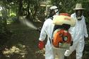 Santé, les chiffres du chikungunya