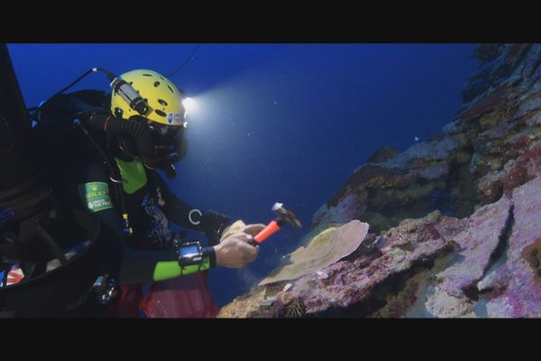 Under The Pole / recherche fonds marins