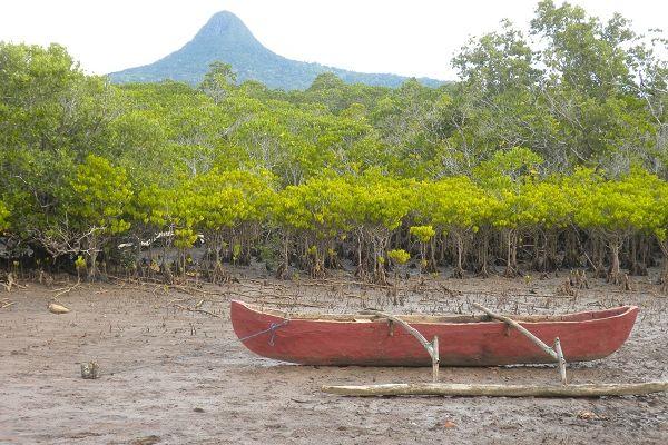 Mangrove à Mayotte