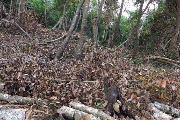 forêt 3