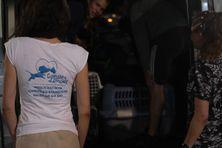 Les étudiantes de l'école vétérinaire de Toulouse aident à ranger les cages permettant d'attraper les chats.