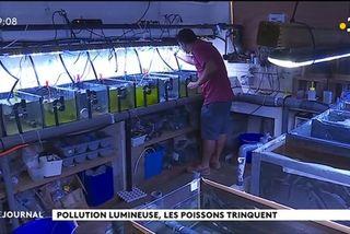 Les éco systèmes marins victimes de pollution lumineuse