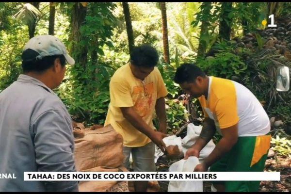 Les cocos, l'autre trésor de TahaaLes cocos, l'autre trésor de Tahaa