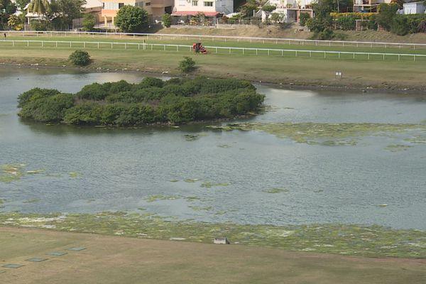 algues vertes hippodrome de Nouméa