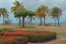 Jardin tropical dans un hôtel du sud Martinique.
