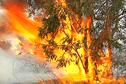 Incendie à Boulouparis en images