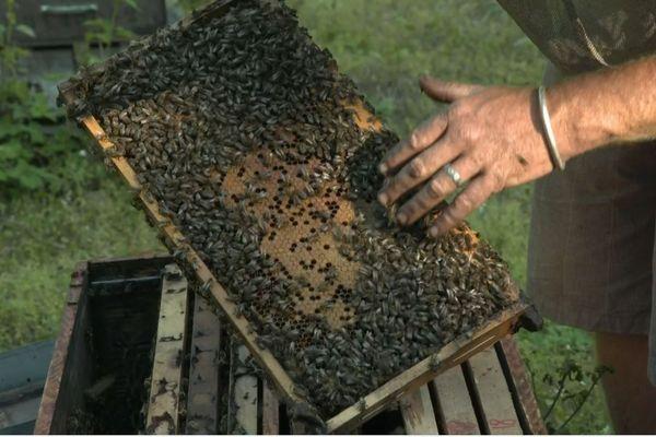 Dans le rucher