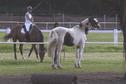 Tahiti importe des chevaux de Nouvelle-Zélande