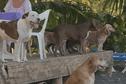 Un collectif propose de l'aide pour stériliser les animaux
