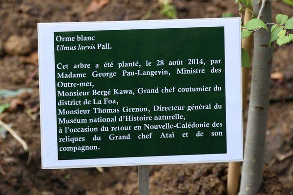 La plaque qui accompagne l'orme blanc planté le 28 août 2014 par Bergé Kawa, George Pau-Langevin et Thomas Grenon, directeur du Muséum national d'histoire naturelle.