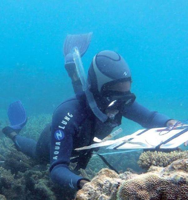 Plongée programme Acropora (30 mars 2017)