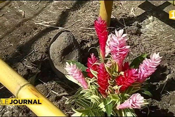 Les bénévoles au chevet de la tortue rescapée du jardin  botanique