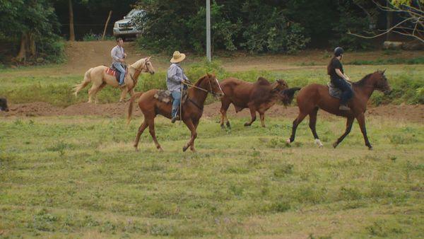 Rentrée de bétail Yala ranch