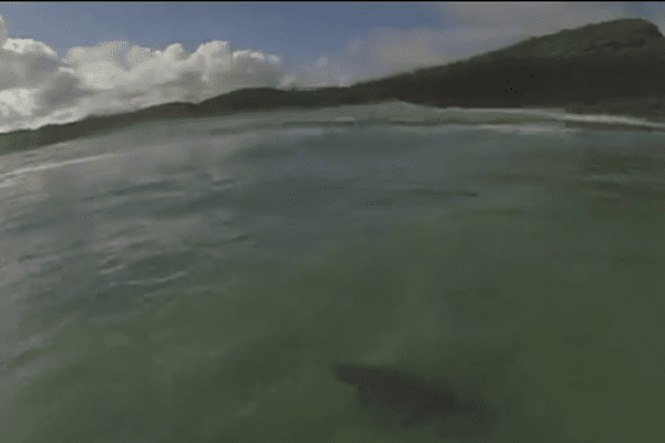 Un australien surfe au dessus d'un requin