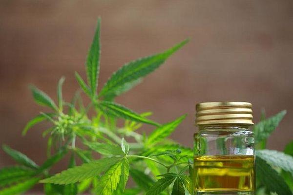 L'avenir du cannabis thérapeutique au coeur des discussions en décembre à l'ONU