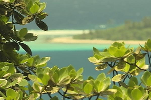 Tourisme : enquête notoriété des destinations Ultra-Marine