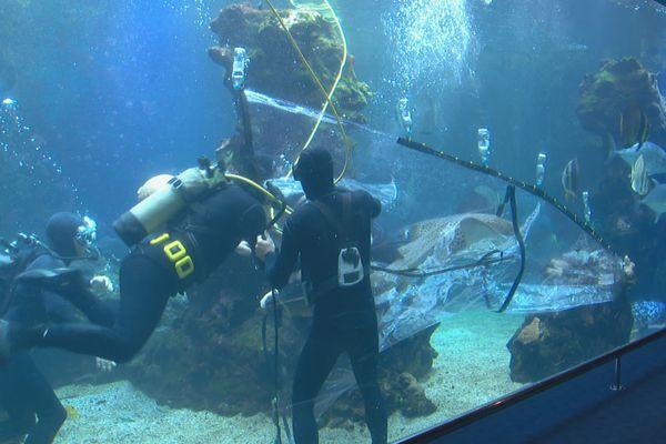 Aquarium des lagons déménagement 1