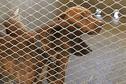Campagne de stérilisation des animaux errants en Nouvelle-Calédonie