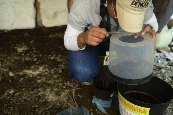Une chercheuse observe les moustiques capturés dans un piège en Colombie