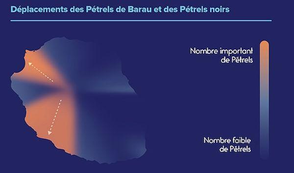 Déplacement des Pétrels à La Réunion