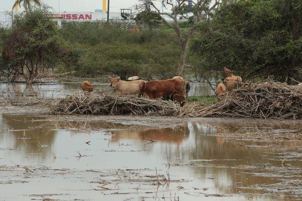 Plus de 100 mm d'eau sur le centre de la Martinique ce samedi