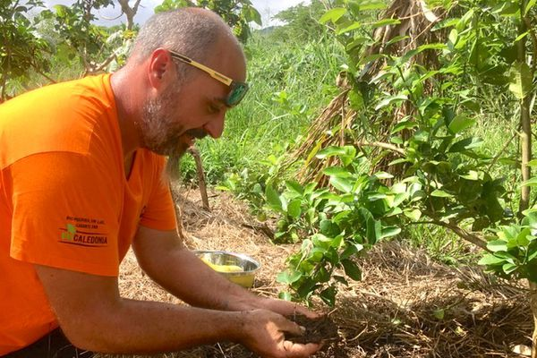 Ben Bugeon, agriculteur biologique à La Foa, certifié Bio Caledonia, avril 2021