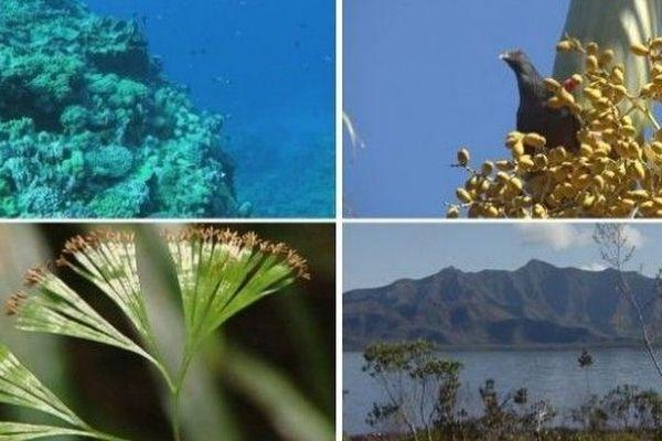 Mieux protéger la biodiversité