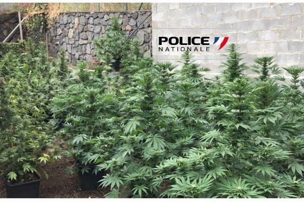 trafic de drogue saisie record à Saint-Paul cannabis skunk police brigade des stups saint-denis 230921